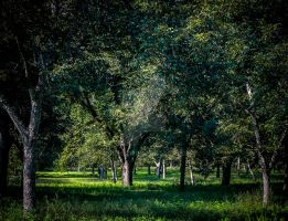 Green Country by mikeheer