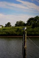 Manasquan by xXCold-FireXx