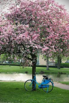 Blue Bike and the Cherry Tree by Glambition