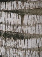 00024 - Rough Palm Tree Bark by emstock