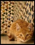 .Alhambra Cats. by rorron