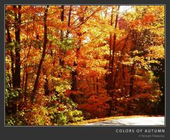 Colors Of Autumn by teresastreasures72