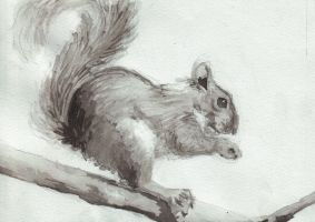 Squirrel by Penguinity
