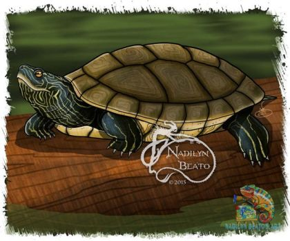 Northern Map Turtle by NadilynBeato