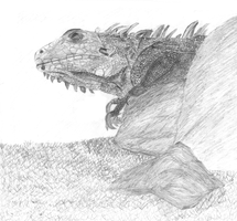 Lizard Drawing by tharglet