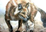 Dhole in the dust by Katie-Z