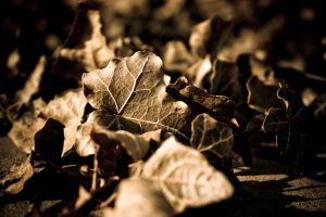 Sepia Leaves by light-scape
