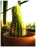 +cactus+ by mR-StIck