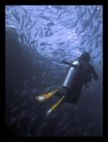 Jinky and Jackfishes by hozguler
