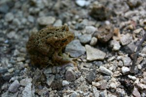 Toadlet III by EarthBerry
