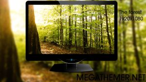 Nature Wallpaper: The Forest by poweredbyostx