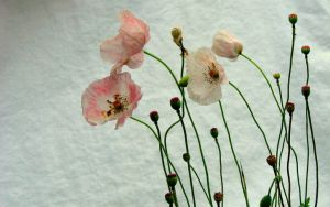 Pink Poppies in the Pale II by Foxytocin