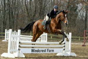 Bay Warmblood Equitation over Fences by HorseStockPhotos