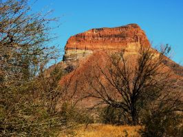 A Butte and Mesquite by SharPhotography