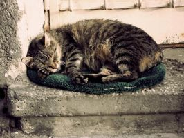 sleeping cat by pills4happiness