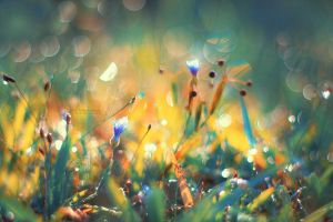 The Symphony of the Colors by John-Peter