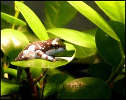 Frog Baby by Tienna