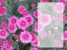 Flower Template by sd-stock