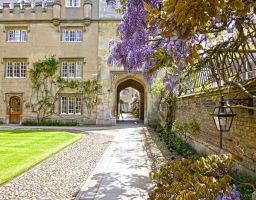 Sidney Sussex by Syntheta-NZ