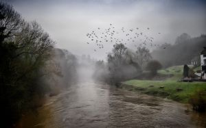 Birds over Misty River by MileHighPhotography