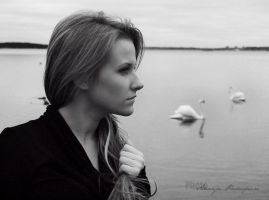 swans I by Red-passion