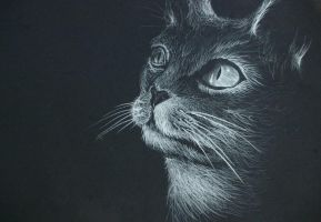 kitty cat by alcohobo
