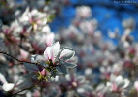 Spring is here VII by NorthernLand