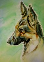 Dog commission 1 by Horace-Bulregard