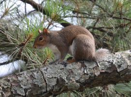 Justa Squirrel relaxing by Tailgun2009