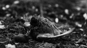 Laying Dead by LaurentGiguere