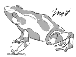 Poison Dart Frog Sketch by Imalune