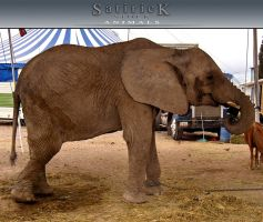 satirick-stock ANIMALS1 by satirick-stock