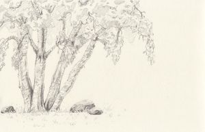 Trees and rocks by LMP-TheClay