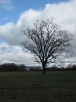 Lone Oak by mariposa116