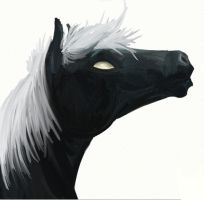 Black Horse by Hyourin