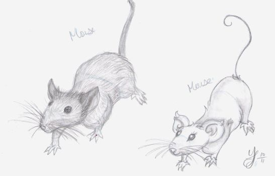 Mouse - Realistic and Cartoony by Yukiko-chan