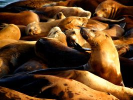 Pinniped Pile by soyrwoo