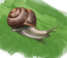 Snail study by Ranivius