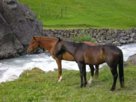 Horses -stock 1- by Corolla-Clan
