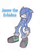 James the Echidna by AnimalLover4Ever