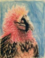 Bearded vulture by MoonstruckKid