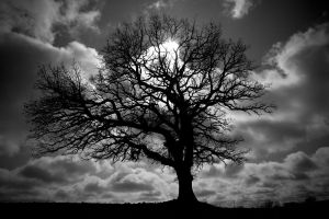 Grandfather Tree ~ B/W by quasi-Virtuoso