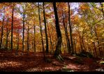 Autumn forest by Trance-Vania