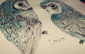 owls by Denor