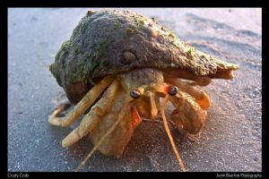 The Crusty Crab by mojorison
