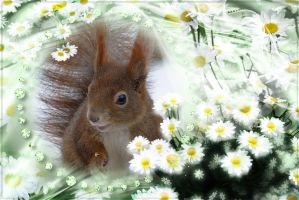 Squirrel in Camomile by Cundrie-la-Surziere