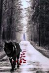 The Black and White Wolf. Photomanipulation. by laluna19