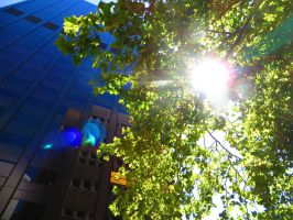 Sunlight through the tree next to the Black Stump by ryanthescooterguy
