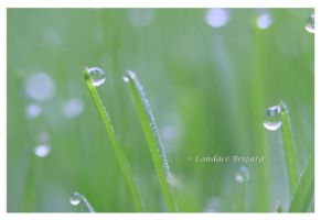 Morning Dew by Vamaena