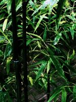 Bamboo Jungle by MFDonovan